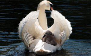Nouvelles vidéos sur les perceptions sensorielles chez les oiseaux