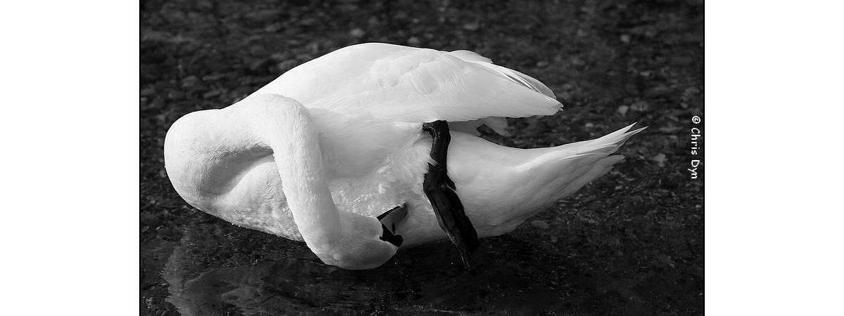 Les perceptions sensorielles chez les oiseaux